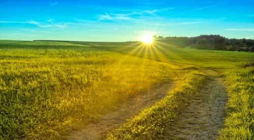 golden summer meadow