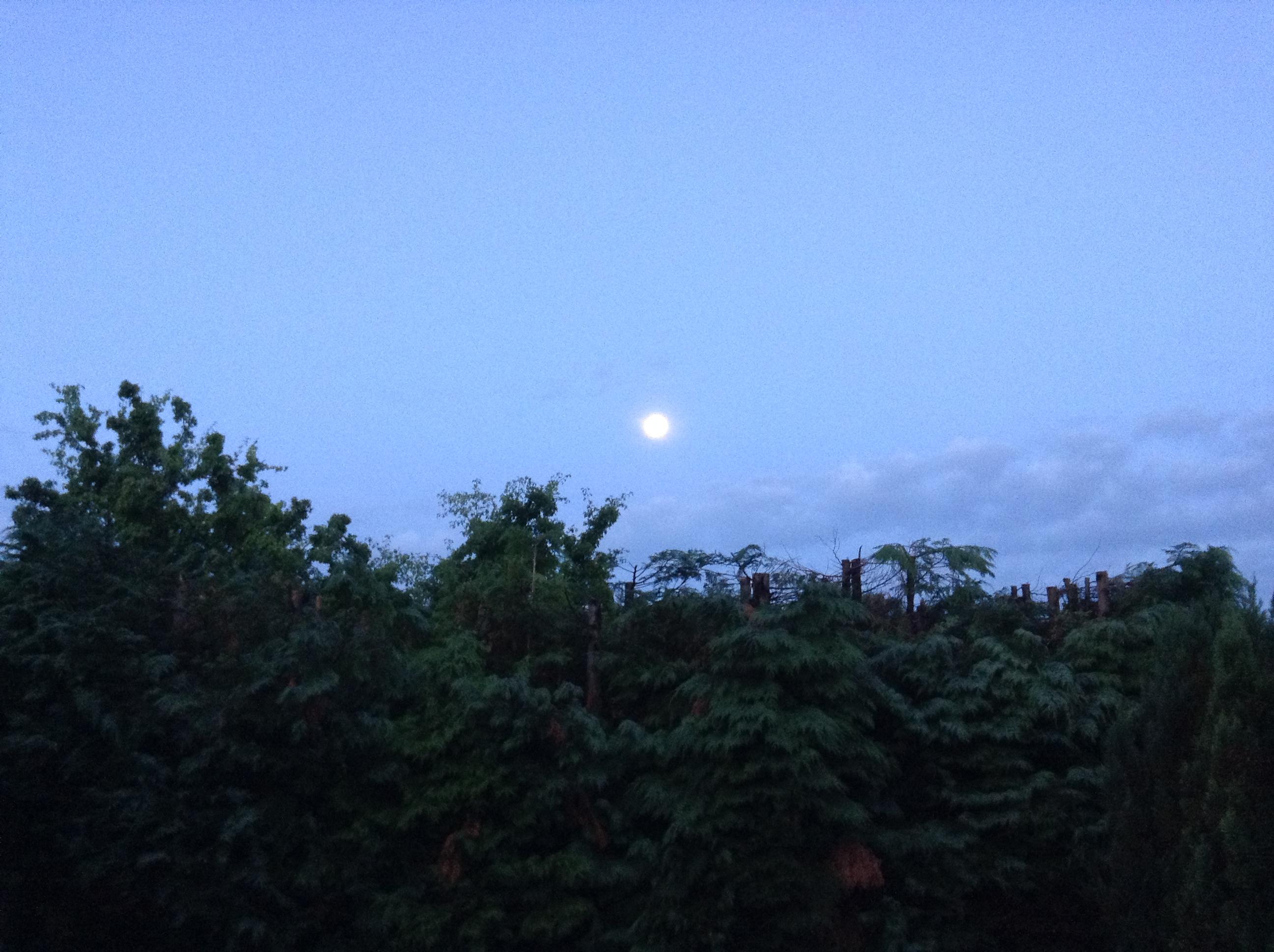 Moonlight Sky from Clarabelle's Back Garden 24.07.13