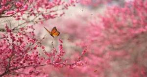 Inner Butterfly